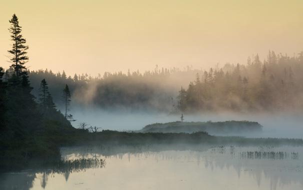 Фото обои лес, природа, туман, озеро, утро