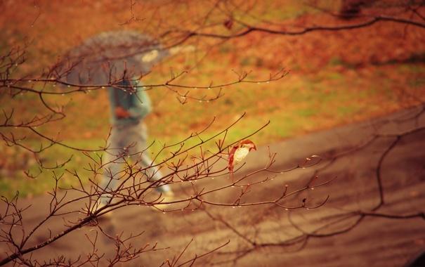 Фото обои капли, осень, настроение, человек, дерево, дождь, зонт