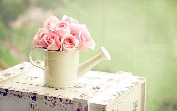 Фото обои зелень, цветы, розы, лейка, розовые