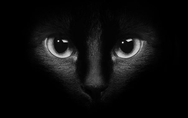 Фото обои кошка, глаза, кот, котэ, тёмный фон