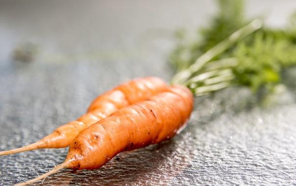 Фото обои морковь, еда, макро