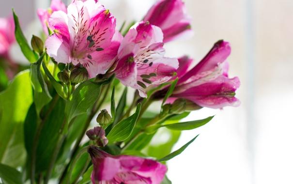 Фото обои цветы, букет, бутон