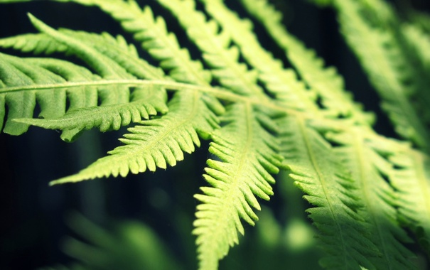 Фото обои растения, папоротник, лето