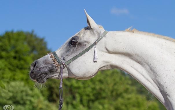 Фото обои небо, морда, конь, лошадь, грива, профиль, шея