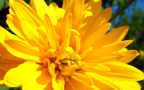 Фото обои зелень, цветок, трава, солнце, желтый, яркий
