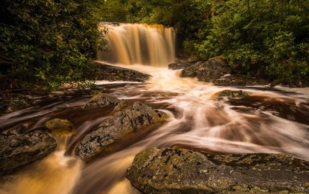 Фото обои природа, река, водопад, джунгли