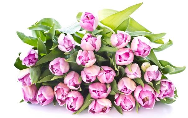 Фото обои букет, тюльпаны, розовые