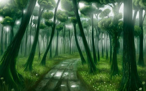 Фото обои лес, свет, deep forest
