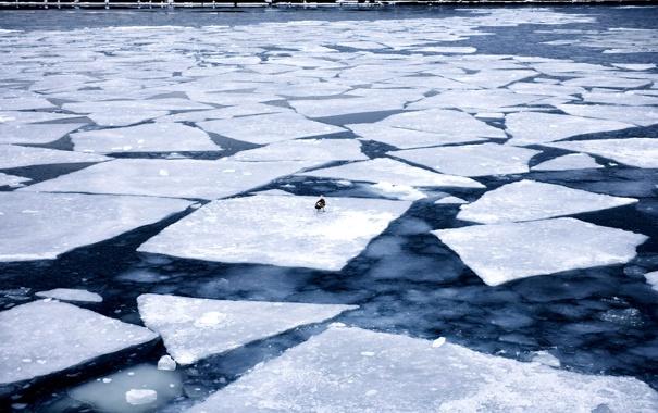 Фото обои лед, вода, птица