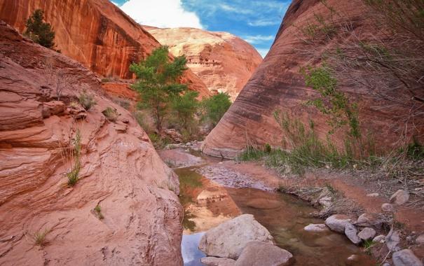 Фото обои небо, вода, облака, камни, дерево, скалы, каньон