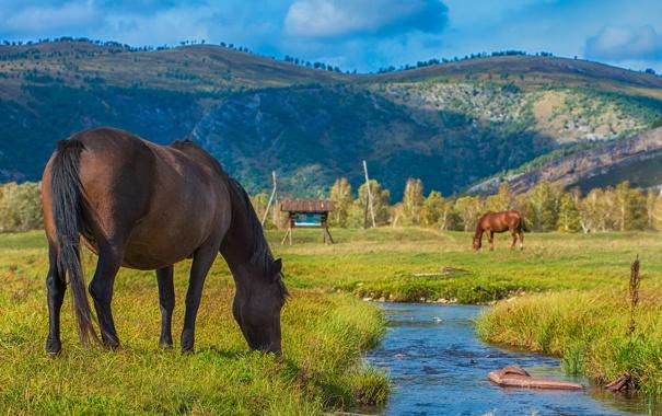 Фото обои поле, трава, ручей, кони, лошади, пастбище