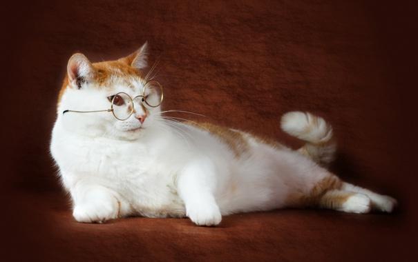 Фото обои кошка, фон, очки