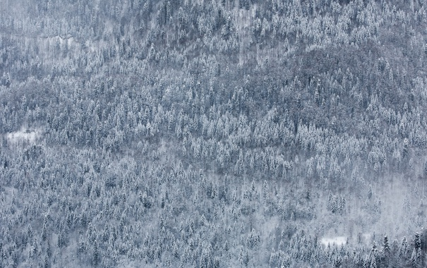 Фото обои зима, лес, снег, пейзаж, природа, обои, гора