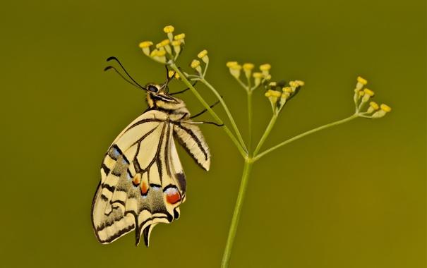 Фото обои бутоны, wings, flower, moth, моли, цветок, stalks