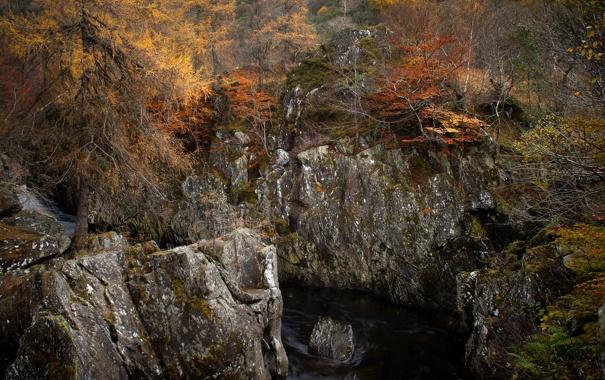 Фото обои осень, лес, деревья, природа, скалы