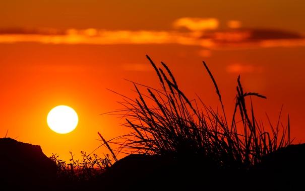 Фото обои небо, трава, солнце, закат, растение, силуэт