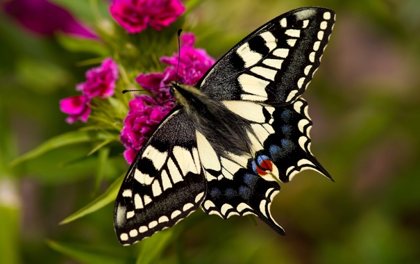 Фото обои цветок, крупный план, бабочка