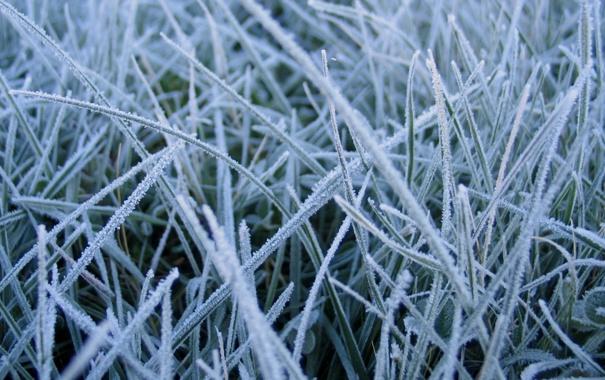 Фото обои иней, трава, заморозок