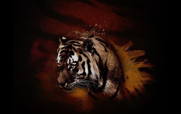 Фото обои оранжевый, красный, тигр, животное, хищник, зверь, коричневый
