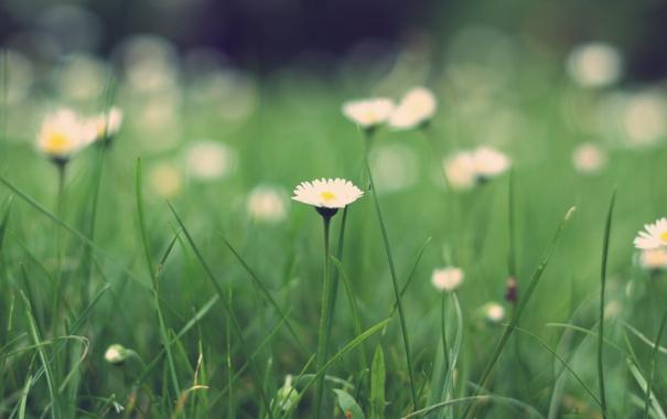 Фото обои зелень, трава, макро, природа, green, поляна, растения