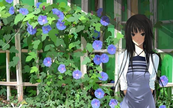 Фото обои цветы, забор, черные волосы, bakemonogatari