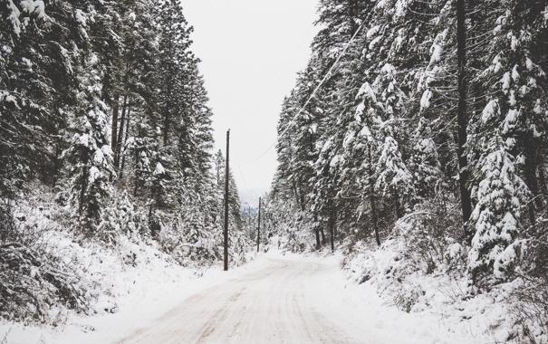 Фото обои зима, дорога, деревья, провода