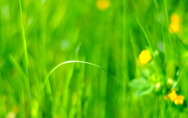 Фото обои поле, трава, цветы, луг
