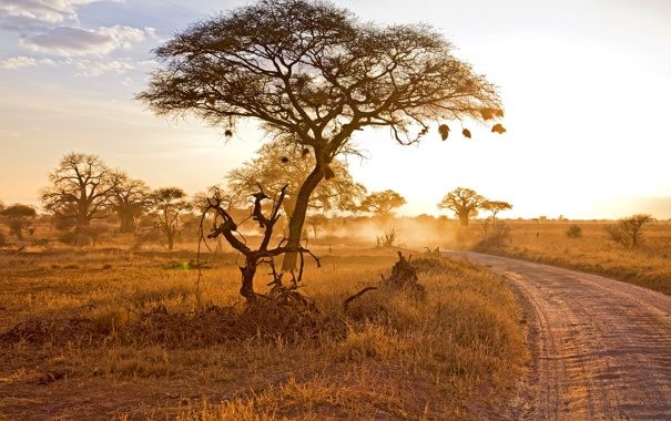 Фото обои пейзаж, природа, Sunset in Tarangire
