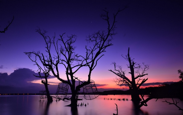 Фото обои деревья, ночь, озеро