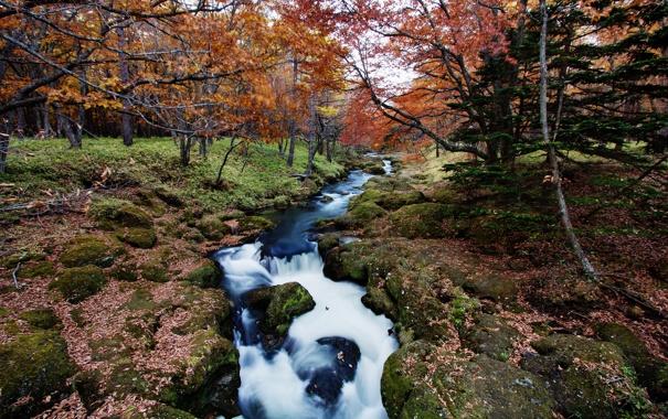 Фото обои осень, лес, река, ручей