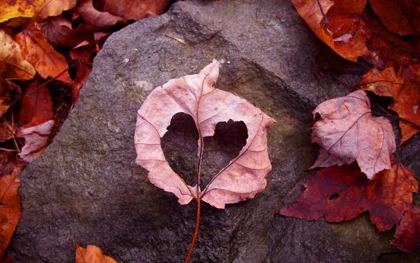 Фото обои осень, листья, любовь, лист, земля, камень, рамка