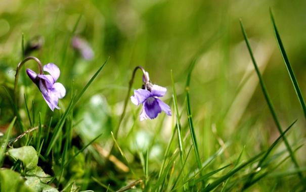 Фото обои растения, природа, трава, макро, цветы