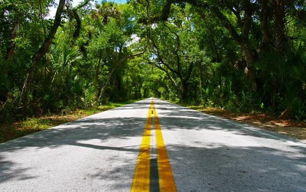 Фото обои nature, лето, зелень, листья, деревья, дорога, разметка