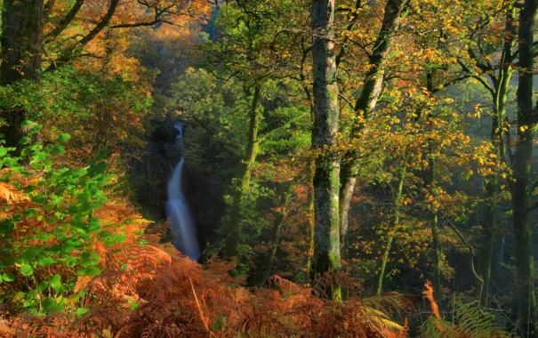 Фото обои осень, лес, деревья, ветки, Англия, водопад, кусты