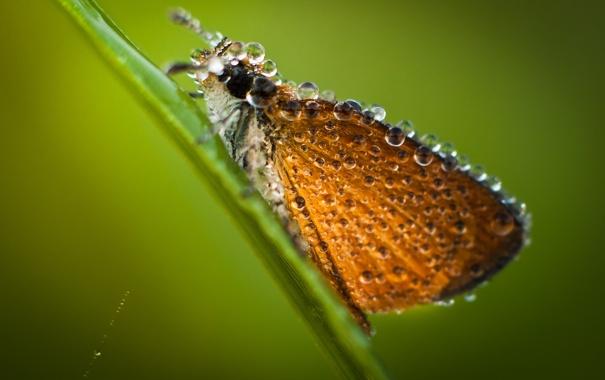 Фото обои капли, макро, бабочка, крылья, насекомое