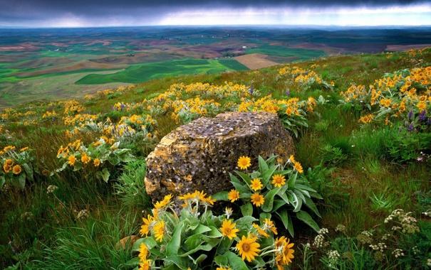 Фото обои цветы, тучи, холмы, ландшафт, камень, желтые