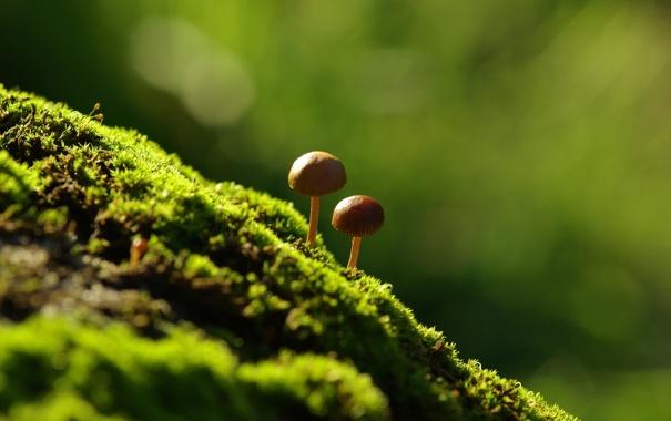 Фото обои макро, мох, грибочки