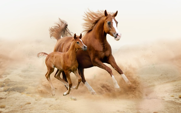 Фото обои поле, лошади, детеныш, мама