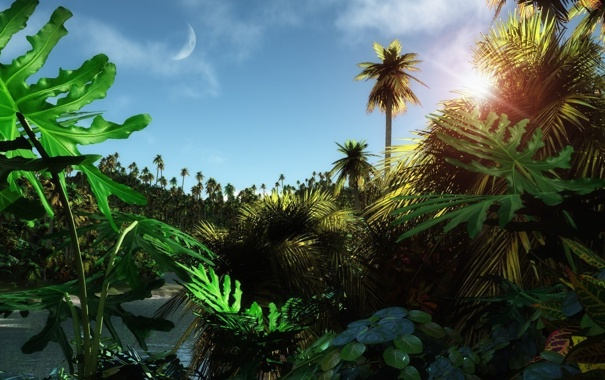 Фото обои лес, пальма, Тропики