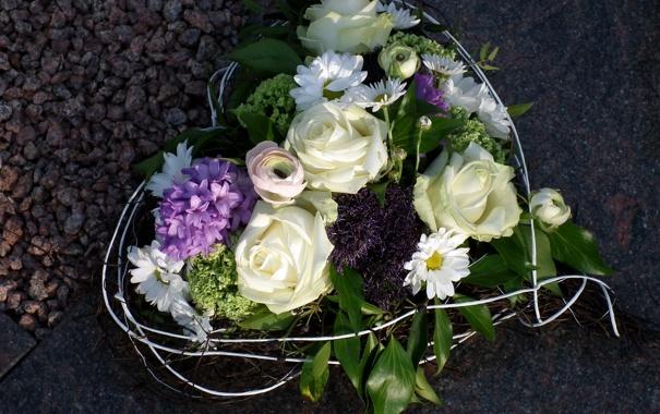 Фото обои цветок, цветы, природа, подарок, сердце, розы, ромашки