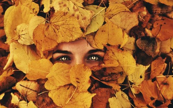 Фото обои осень, глаза, взгляд, листья, фон