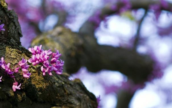 Фото обои природа, дерево, весна