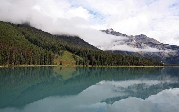 Фото обои лес, горы, туман, река