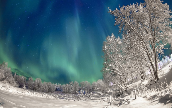 Фото обои зима, небо, снег, деревья, ночь, сияние, северное