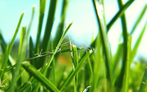Фото обои зелень, трава, природа, зелёный, макро фото