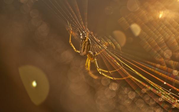Фото обои макро, лучи, свет, паутина, паук, насекомое