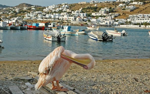 Фото обои город, река, фото, дома, лодки, Греция, пеликан