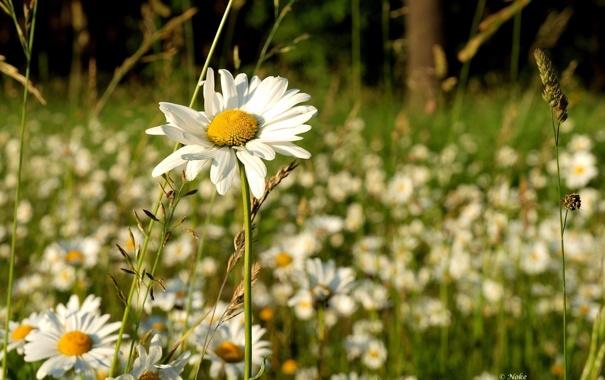 Фото обои лето, трава, солнце, цветы, природа, фон, обои