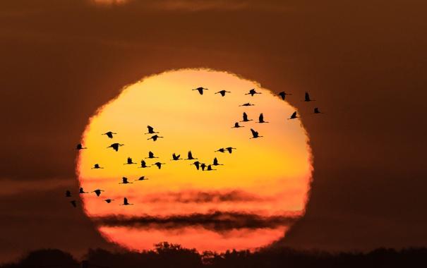 Фото обои осень, птицы, ночь, полёт