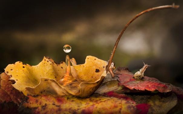 Фото обои макро, лист, капля, улитки